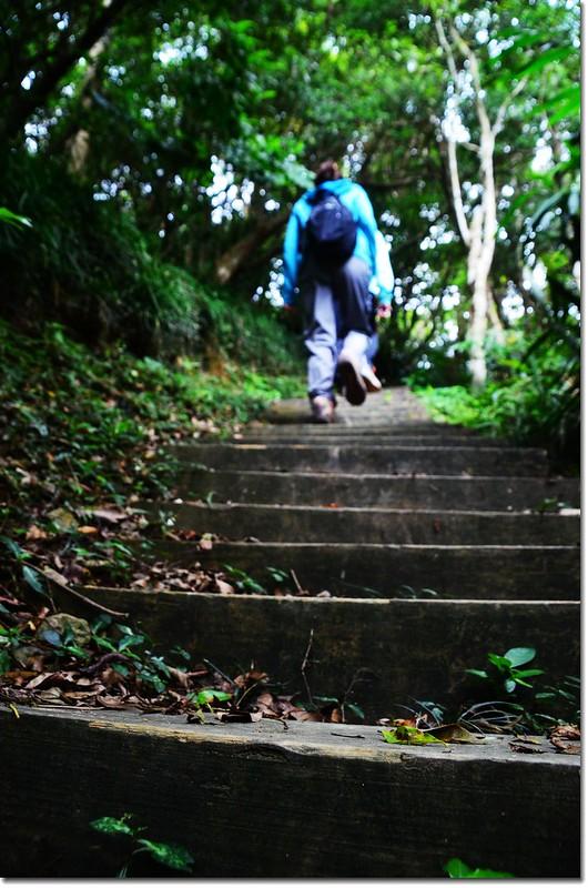 帽子山登山步道 3
