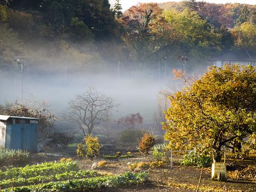 川霧_2013-11-27_N02