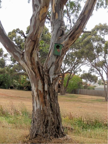 Nestboxes in trees