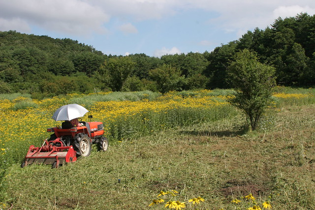 日射しが強くなってきたのでパラソルを使用.草刈りはどんどんと進んでいる.