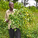 Agroforestry for Dairy Farming