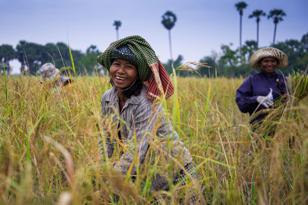 Rice field worker, Cambodia