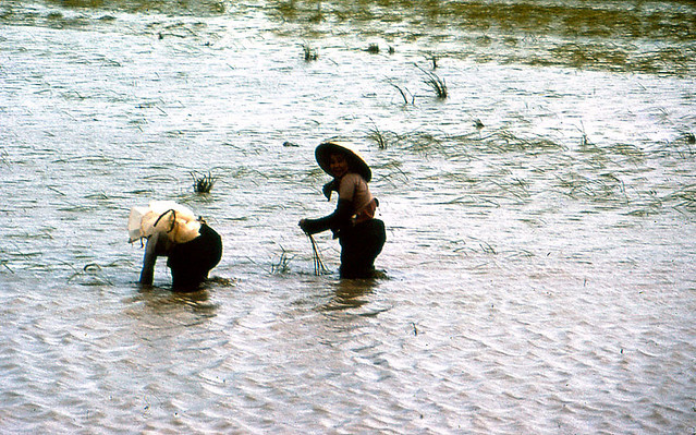 Dinh Tuong Province 1972 - Planting Rice