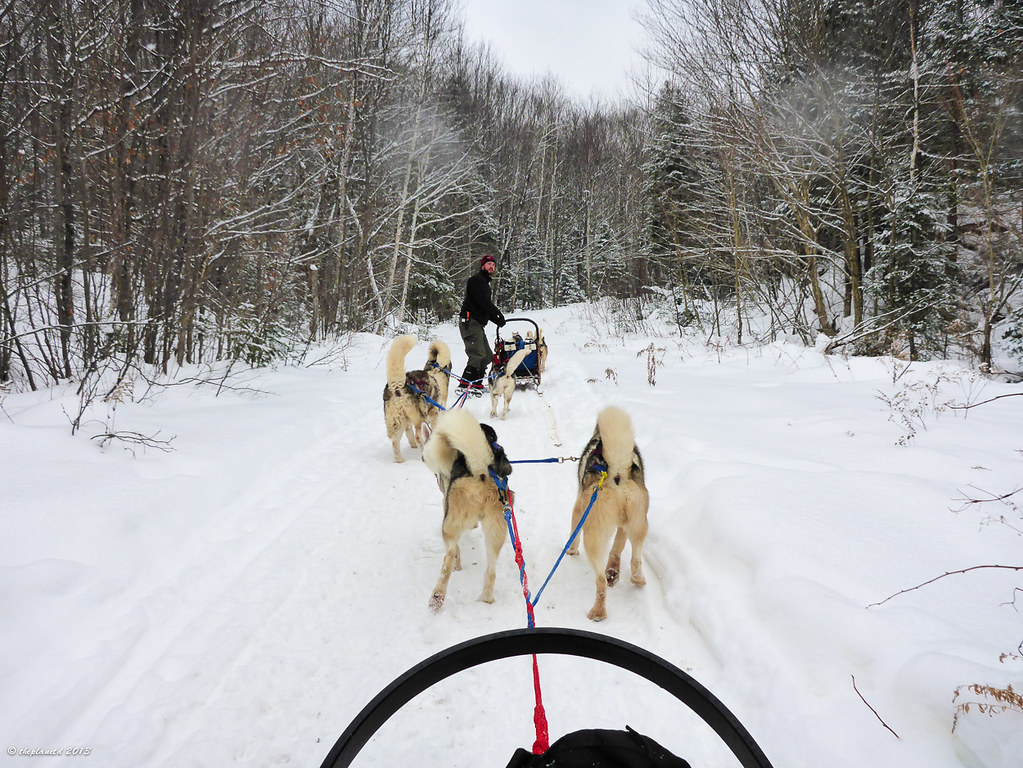 dogsledding, on the trail