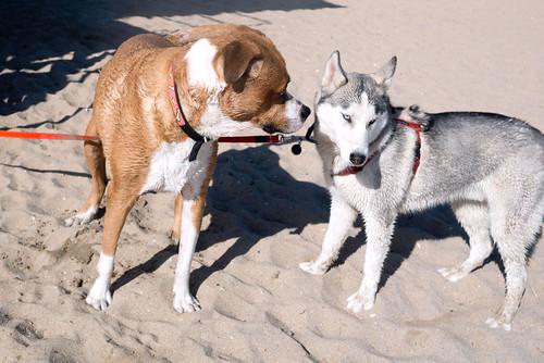 dogbeach43