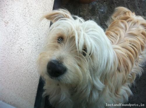 [Reunited] Mon, Feb 10th, 2014 Lost Male Dog - Porterstown,, Kill, Kildare