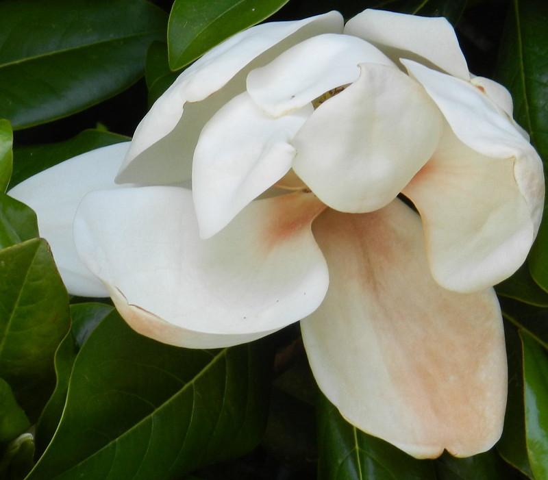today's flowersDSCN2924