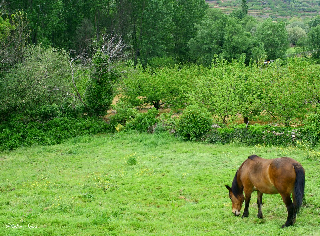 Extremadura_ Caceres (10)