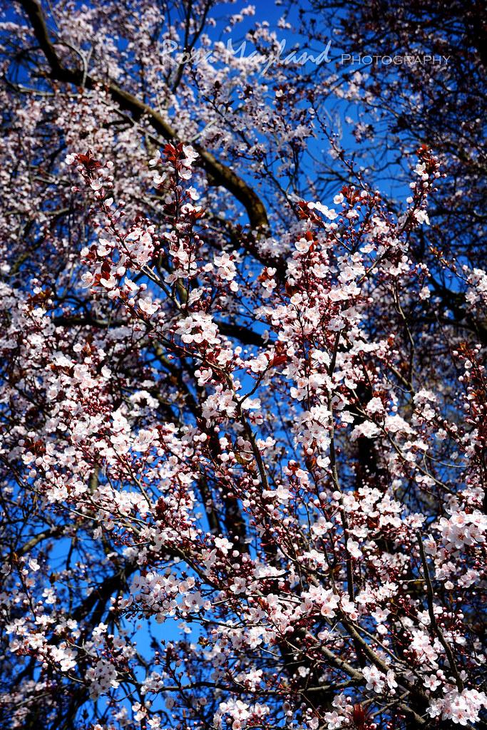 natures beauty essay Essay about nature's beauty este o lucrare care ne aduce aminte de originile vieții, mama natură fiind înconjurați în fiecare zi din ce în ce mai mult de ju.