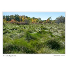 Autumn Grasses, Arboretum