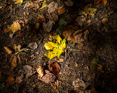 Leaves Decay