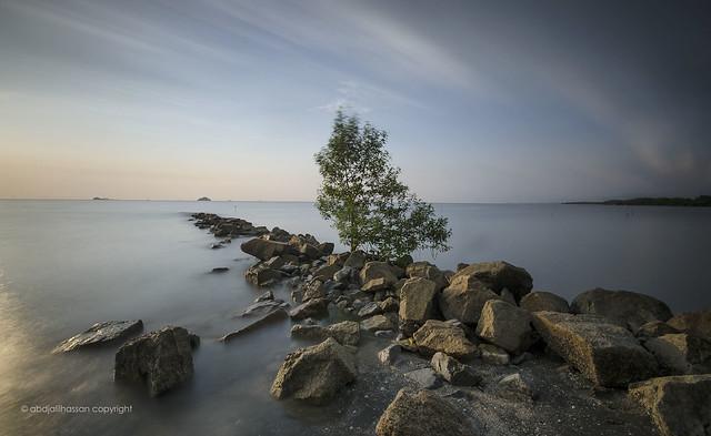 The Single Tree, Nikon D7000, Sigma 10-20mm F4-5.6 EX DC HSM
