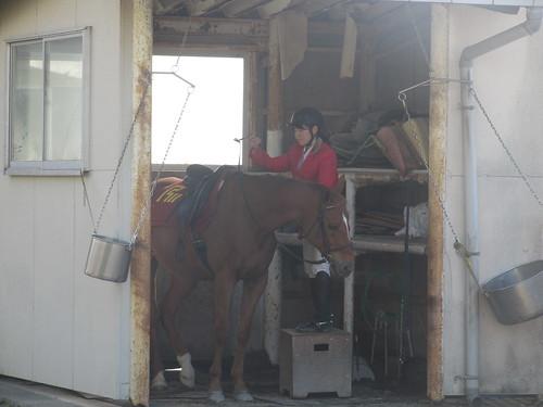 金沢競馬場のパドック待機所の裏の誘導馬の小屋