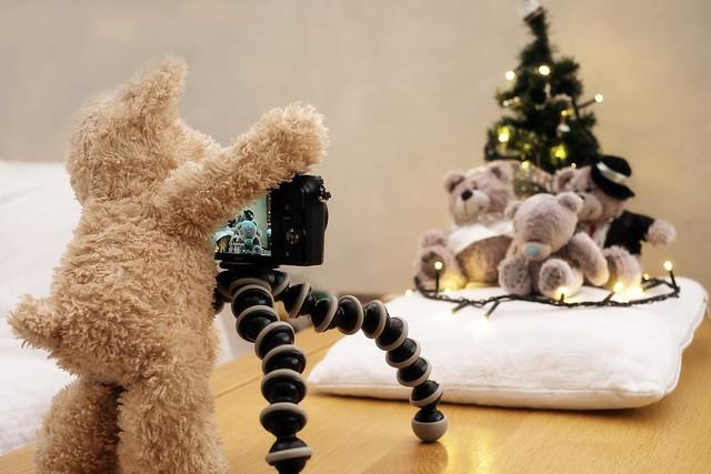 Bear shoot