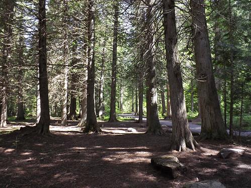 sun thru trees 042