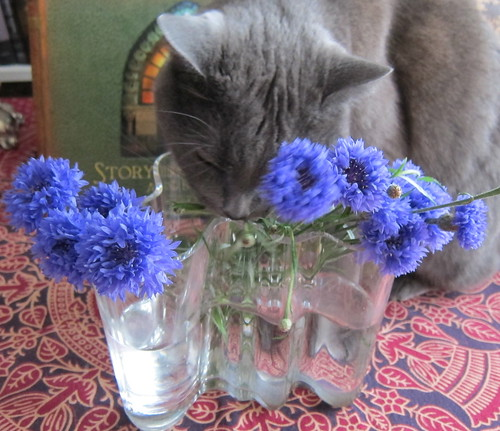 Kissa pitää ruiskaunokista by Anna Amnell