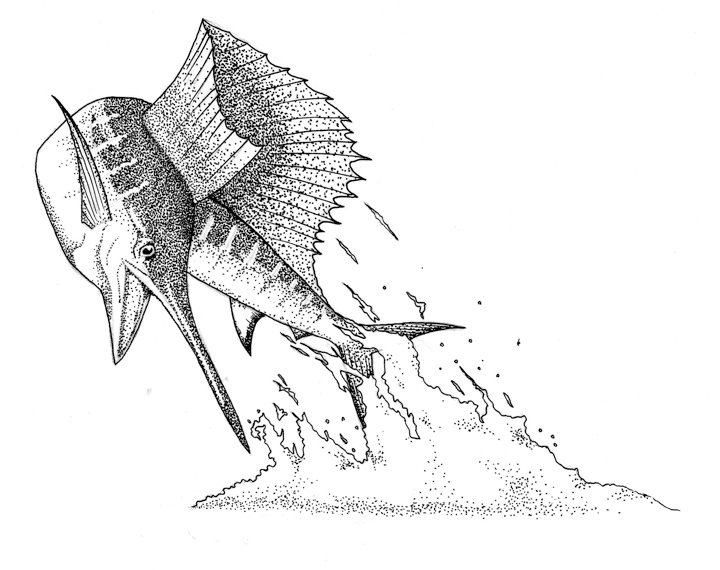 Marlin Stippling