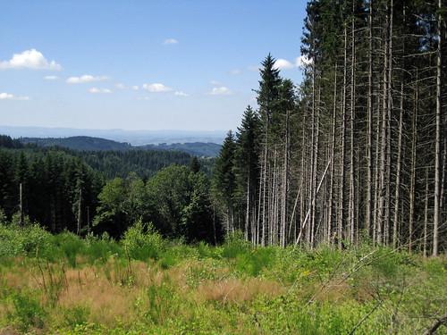 Camino 2012