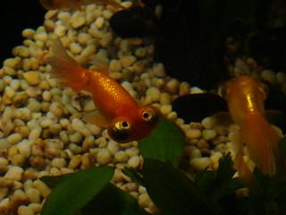 077 Vissen