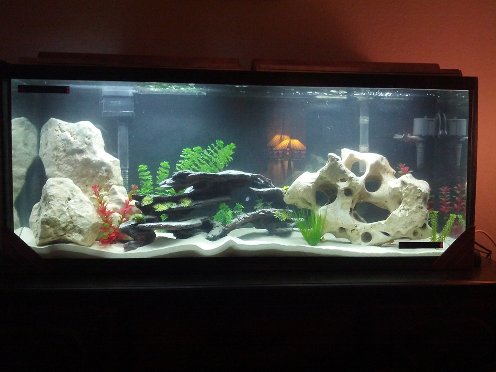 Cichlid forum my aquarium for Fish for 55 gallon tank