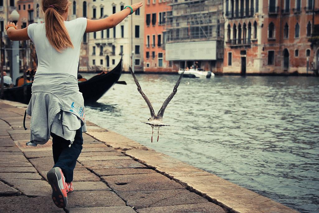 Venice, Sea Gull, Grand Canal