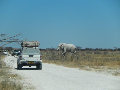 Namibië, Etosha NP - olifant steekt over