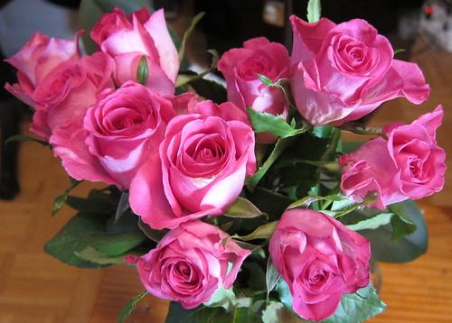 Marraskuun ruusut by Anna Amnell
