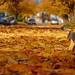 An Autumn Carpet by DTBの写真撮影