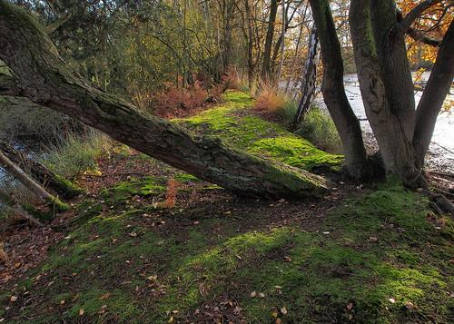 nature landscape moss trees limburg wijvenheide sintjansvijvers ngc