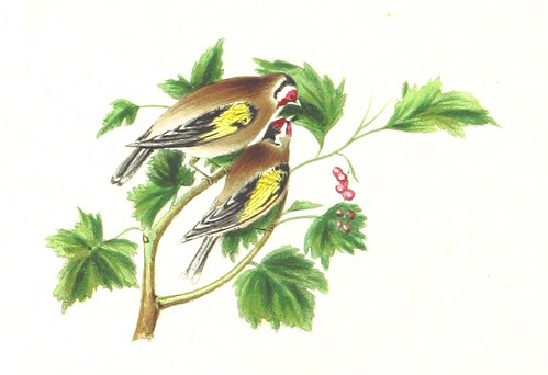 Image taken from page 84 of 'The Poetry of Birds, selected from various authors; with coloured illustrations. By a Lady'