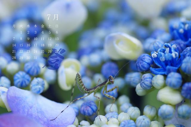 写真_澄 7月