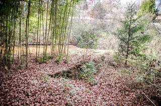 Pacolet stream dam