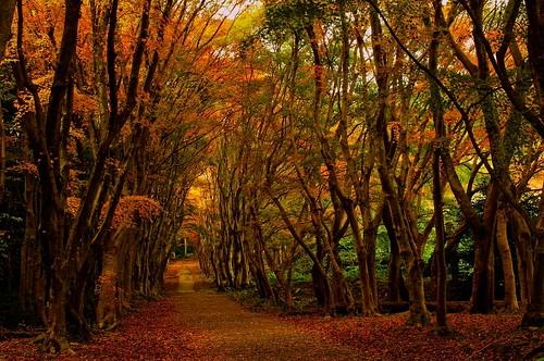 autumn nature japan europe pentax kr fukuoka kyusyu autumncolor kitakyusyu project365