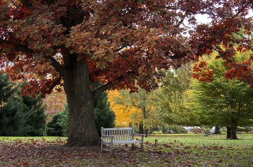 autumn trees landscape parks westerville pentaxk01 smcpda50200mmed pentaxart