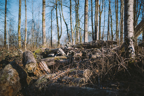 wood trees nature rotting canon washington growth pile pacificnorthwest carnation stacked piled canoneos5dmarkiii sigma35mmf14dghsmart