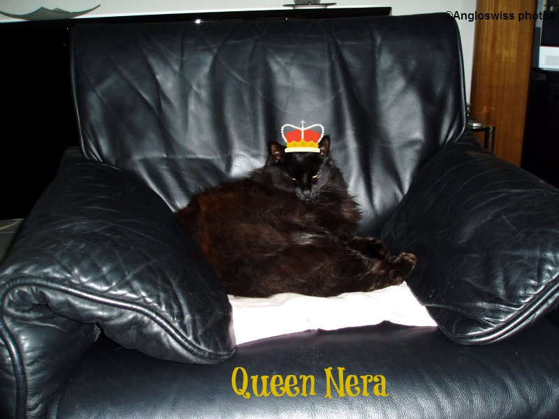 Nera relaxing on the De Sede