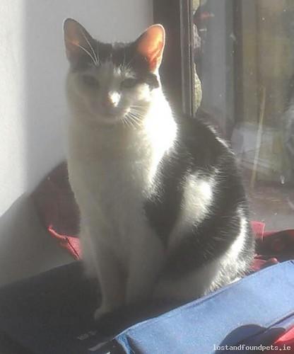 Sun, Oct 20th, 2013 Lost Female Cat - Wool Green, Wicklow