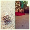 A friend didn't want to lose Franklin as he walked around the house. by lisasulaiman64