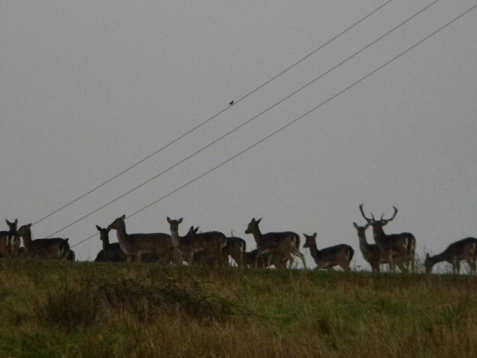 Deer Loughton to Epping