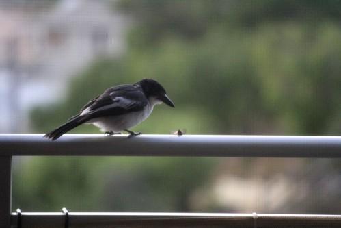 Ew, Birdie.