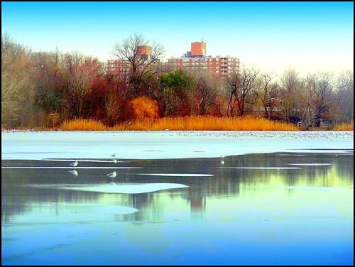 winter newyork reflection brooklyn image prospectpark dmitriyfomenko winter12014