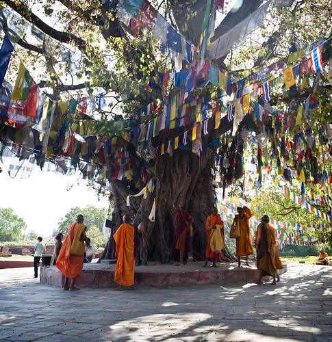 travel trees nepal portrait panorama man travelling asian religious asia day buddha candid buddhist flag prayer religion praying monk buddhism flags monks portraiture devotion nepalese prayerflags devotee devotees pilgrimage buddhisttemple prayers pilgrim devoted nepali pilgrims buddhists prayerflag southasia buddhistmonks southasian buddhistmonk lumbini candidportraiture vertorama rupandehi rupandehidistrict