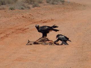 Adler beim Emuschmaus...