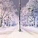 Omotesando Dori, Closed by Snow by tokyofashion