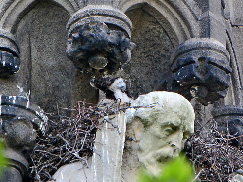 Cathedral Hawk Nest (9981)