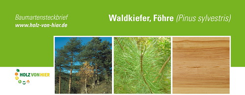 Wald-Kiefer-Header