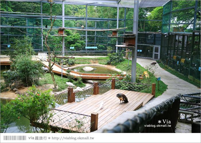 【新竹景點推薦】森林鳥花園~親子旅遊的好去處!在森林裡鳥兒與孩子們的樂園60