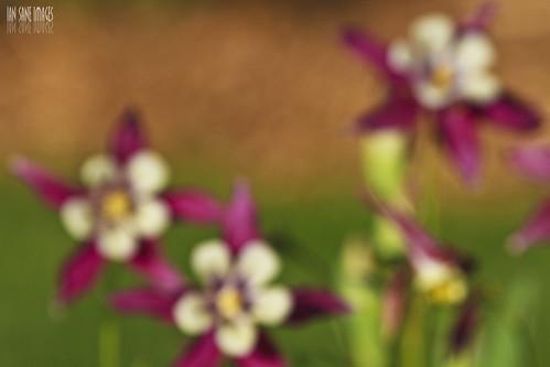 road camera flowers iris light sun blur festival gardens oregon canon lens ian eos is view first images 7d salem columbine usm brooks keizer sane schreiners a quinaby ef100400mm of f4556l blurism