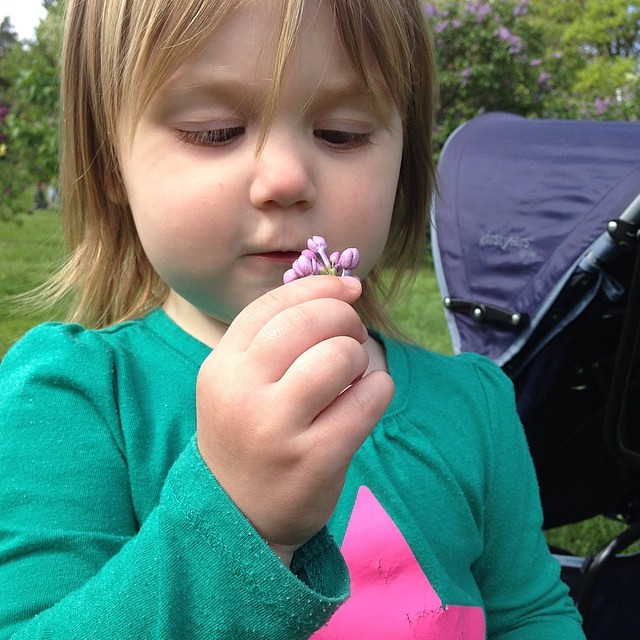 Sniffing the lilac blooms she found on the ground.