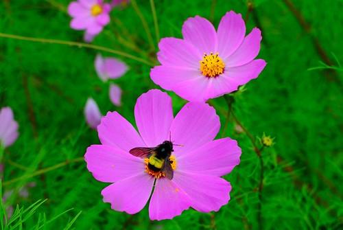 Flowers Darjeeling